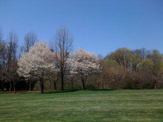 Tpark spring