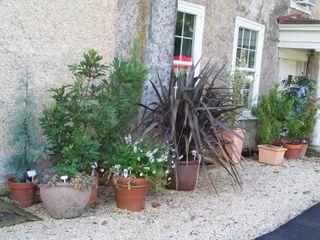Burpee Garden and misc - Sept 106