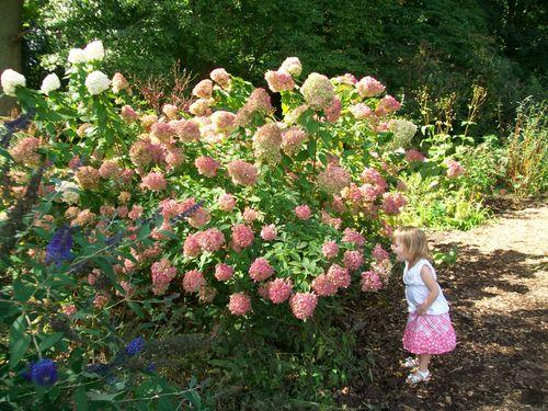 Burpee Garden and misc - Sept 089