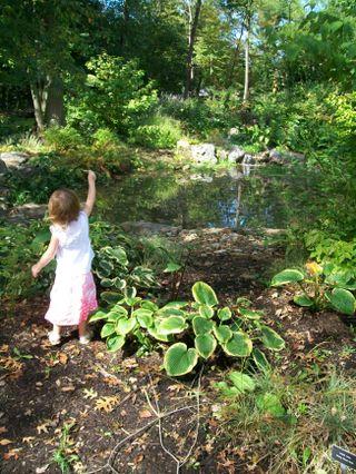 Burpee Garden and misc - Sept 087