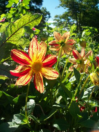Burpee Garden and misc - Sept 062