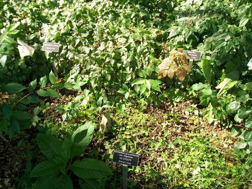 Burpee Garden and misc - Sept 077