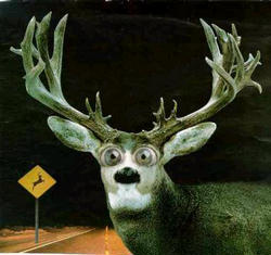 Deer_in_the_headlights_look