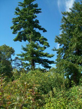 Burpee Garden and misc - Sept 090