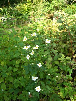 Burpee Garden and misc - Sept 082