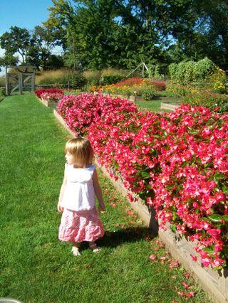 Burpee Garden and misc - Sept 054
