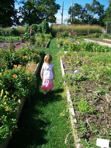 Burpee Garden and misc - Sept 063