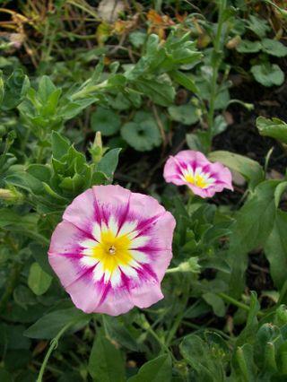 Burpee Garden and misc - Sept 069