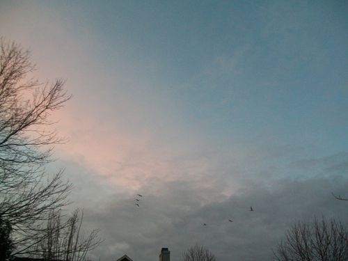 Spring sunrise 018