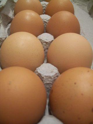 Co-op eggs 002