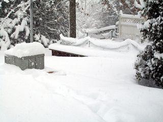 J's penguin project, feb 10 blizzard 020