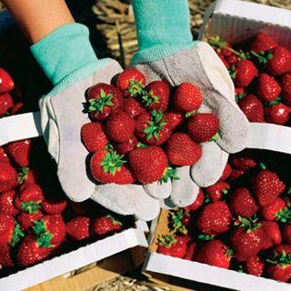 Strawberry_festival