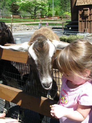 May at the zoo 003