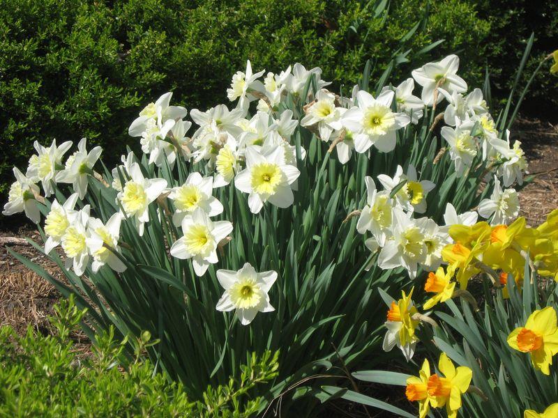 Spring - Mom D's pics 139