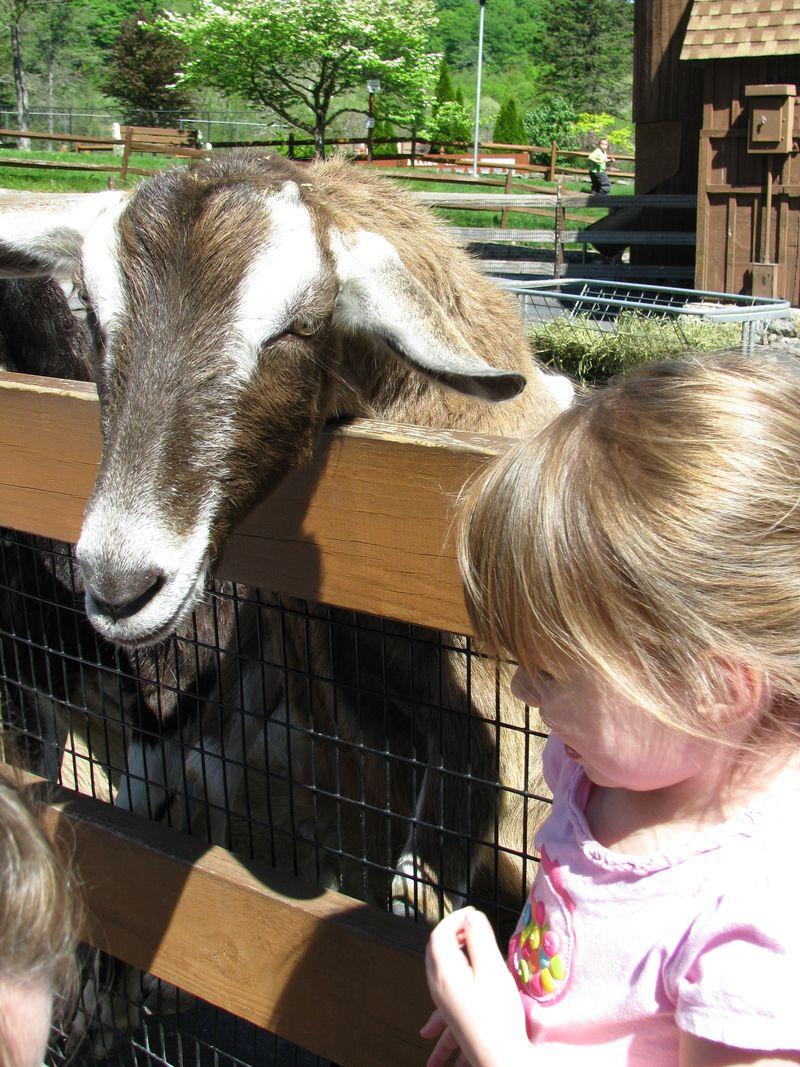 May at the zoo 002